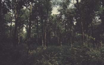 Veduta all'interno del bosco