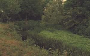 Tratto della roggia Selvata occupato da vegetazione spondicale